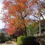 Umidass周辺の紅葉