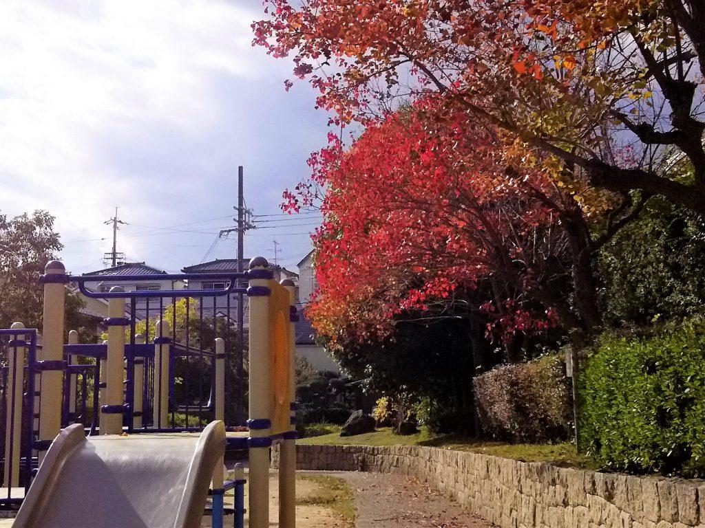 紅葉の桜と落ち葉